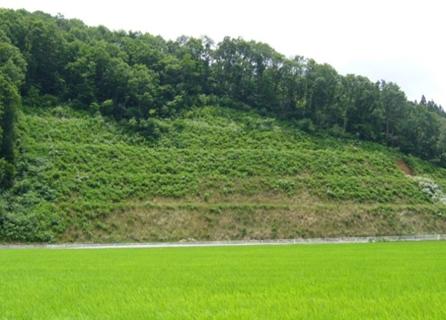 強酸性土壌緑化・自然育成型緑化工:土壌菌工法 へのパーマリンク