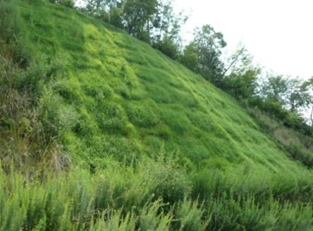 補強土植生法枠工:GTフレーム工法 へのパーマリンク